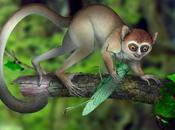 esqueleto completo primate primitivo