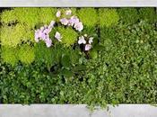 Jardines enmarcados, Naturaleza Viva Salón Casa