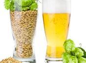 Compuestos cerveza podrían servir para nuevos fármacos