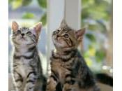 Cómo saber gato macho hembra