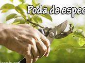 Jardinería: poda