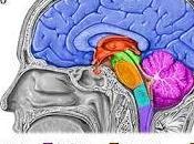 descubrimientos sobre cerebro ayudan eficaces