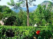 Tuking colinas Lanka: Newara Eliya Ella