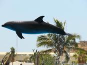 lenguaje delfín