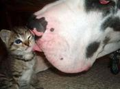 Pareja perro pareja gato, ¿cuál eres?