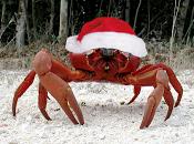 navidad ........¡cangrejo!