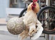 Fotos gallos juegan fútbol China
