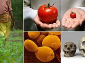 Cinco ideas para alimentar mundo futuro