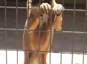 Fiona, desesperada salir jaula. ACOGIDA ADOPCIÓN!!