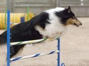 nutrición perro alto rendimiento