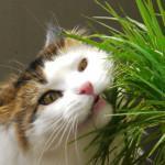 ¿Por gatos comen hierba?