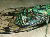 Insectos extinción