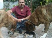 mandamientos nutrición canina (2). codiciarás hacer cambios bruscos alimentación