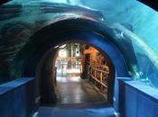Conoces acuario Zaragoza