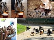 divertidas imágenes animales simplemente ver.