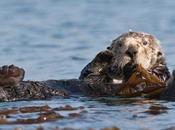 nutrias favorecen crecimiento pastos marinos