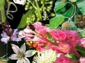 Flores Bach para mascotas