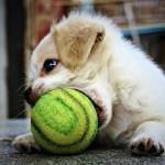 juegos para jugar cachorro