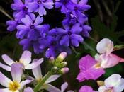 Flores Bach: Enfermedades coronarias arteriales