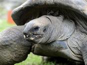 tortuga gigante malaya reproduce primera España
