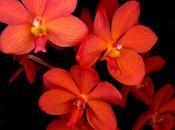 Charla Taller sobre Iniciación Cultivo Orquídeas