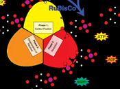 Resumen ciclo Calvin-Benson