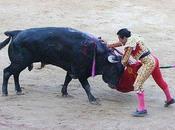 muerte toro