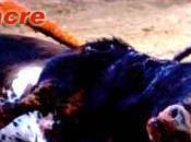 prohibido toros cataluña