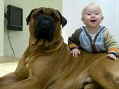 Cuidado Mordidas Nuestras Mascotas