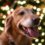 ¿Cómo hacer perro guste veterinario?