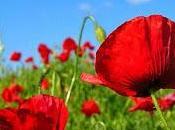 Viagra para nuestras flores