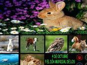 mundial animales
