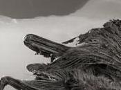 lago convierte animales 'estatuas': fotografías Nick Brandt