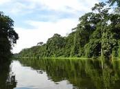 Parque Nacional Tortuguero increíble fauna