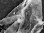 ¿Hay vida extraterrestre estratosfera?