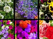 Plantas Coloridas Para Jardineras Madera