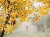 Querido otoño