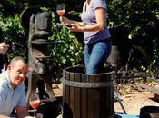 Conviértete bodeguero ruta vino Rioja Alavesa
