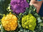 Coliflores colores