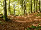 ¿Cómo creéis bosque historia?