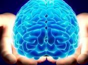 Camino Hacia Cerebro Vidrio