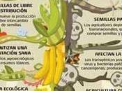 Claves debate Agricultura ecológica transgenicos