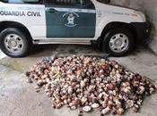 Guardia Civil detiene cuarenta personas hurto setas distintas localidades Palencia