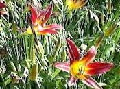 primeros colores primavera