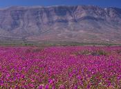 Desierto Florido norte Chile