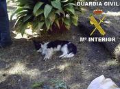 Detenido intentar enterrar vivo perro