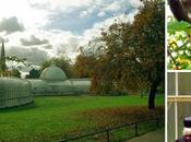Glasgow niños: Jardines Botánicos