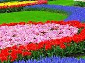 ¿que significan colores flores?