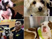 Actos heroicos protagonizados perros salvaron vidas.