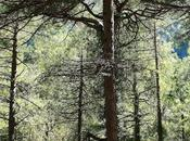 breve paseo Nacimiento Mundo Sierra Segura Riópar (Albacete)